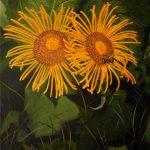 Желтые цветы, 60х40 -художник Валентина Пилипенко
