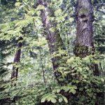 Сергей ГРИГОРЬЕВ Свежесть лесной тишины 56х76cм-акварель-бумага 2015