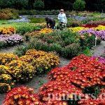 Заказать картину-Цветы