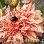 Заказать картину-Цветы14