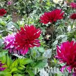 Заказать картину-Цветы25