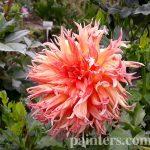 Заказать картину-Цветы26