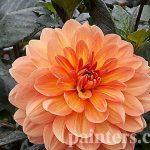 Заказать картину-Цветы5