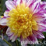 Заказать картину-Цветы9