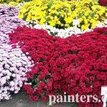 Картина на заказ-цветы7