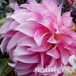 Купить картину-Цветы11