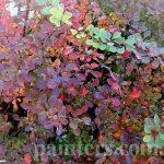 Фото-Осень,пейзаж,заказать картину по фотографии