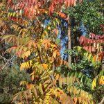 Фото-Осень,пейзаж,заказать картину по фотографии.