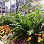 Ботаника-Торонто,Канада 2