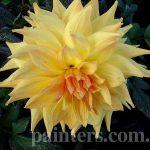 Фото-Фото-Цветы,цветочный натюрморт,заказать картину