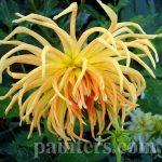 Фото-Фото-Цветы,цветочный натюрморт,заказать картину1