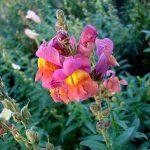Цветочная сказка,пейзажи,Фотография