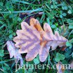 ФотоКиевский ботанический сад,Дубовый лист