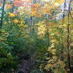 Фото-Киевский ботанический сад,Осень,пейзаж