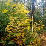 Фото-Осенние пейзажи Олега М. Караваева,фотоальбом