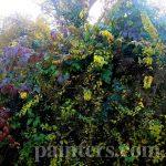 Картина-Осенние пейзажи художника,заказать картину