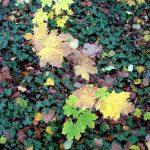 Осенние пейзажи.Листья подножные- Олега М. Караваева,фотоальбом