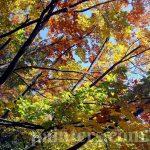 Фотография-Осень золотая-заказать картину по фотографии