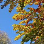 Фото-Осень золотая-заказать картину по фотографии...