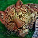Картины художников -Леопард,холст,масло,50х60,2005г.Караваев О...
