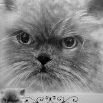 Заказать портрет кошки, собаки - Ник,бумага,карандаш,20х30,2017 г. Олег М.Караваев
