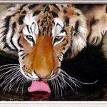 Картина маслом - Тигр,холст,масло,40х60,2006г.