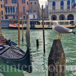 Фото-Чайки,гондолы,Венеция,пейзажи