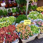 Цветы-Городской пейзаж-Амстердам11