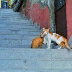 Городской пейзаж.Турция7