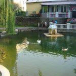 В Парке влюблённых-Белые лебеди