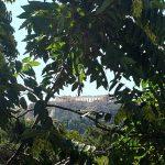 Вид снизу на Парфенон