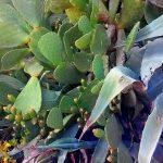 Греческая ботаника 2-пейзаж маслом