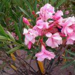 Греческая ботаника-картины на заказ на нашем сайте