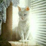 Кошка по имени Бэлка,акварель,30х40, 2012г.Григорьев Сергей