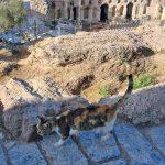 Один из хозяев Акрополя