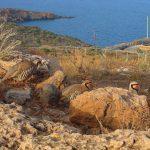 Орнитология Греции