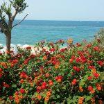 Пляж.Афины - написать картину маслом