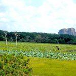 Сафари.Гора-слон