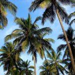 Пальмы,пальмы,пальмы,написать картину-пейзаж