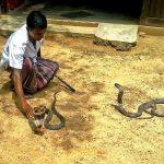 Владелец змеиной фермы укрощает питомцев