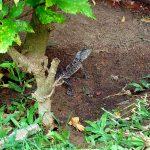 Животный мир Шри Ланки