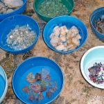 Шри Ланка славится драгоценными камнями
