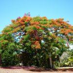Великолепные пейзажи Шри Ланки