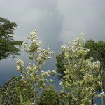 Скоро тропический ливень
