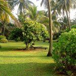 Пейзажи Шри Ланки, заказать картину-пейзаж