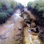Дорога в Джунгли