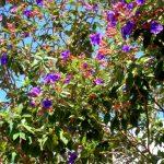 Ботаника Шри Ланки