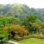 Пейзажи Шри Ланки-фоторепортаж-джунгли