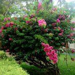 Цветы Шри Ланки,фоторепортаж