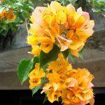 Великолепияе ланкийской флоры